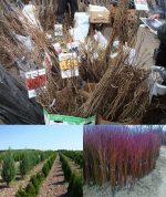 Выращивание саженцев – Выращивание саженцев на продажу как бизнес